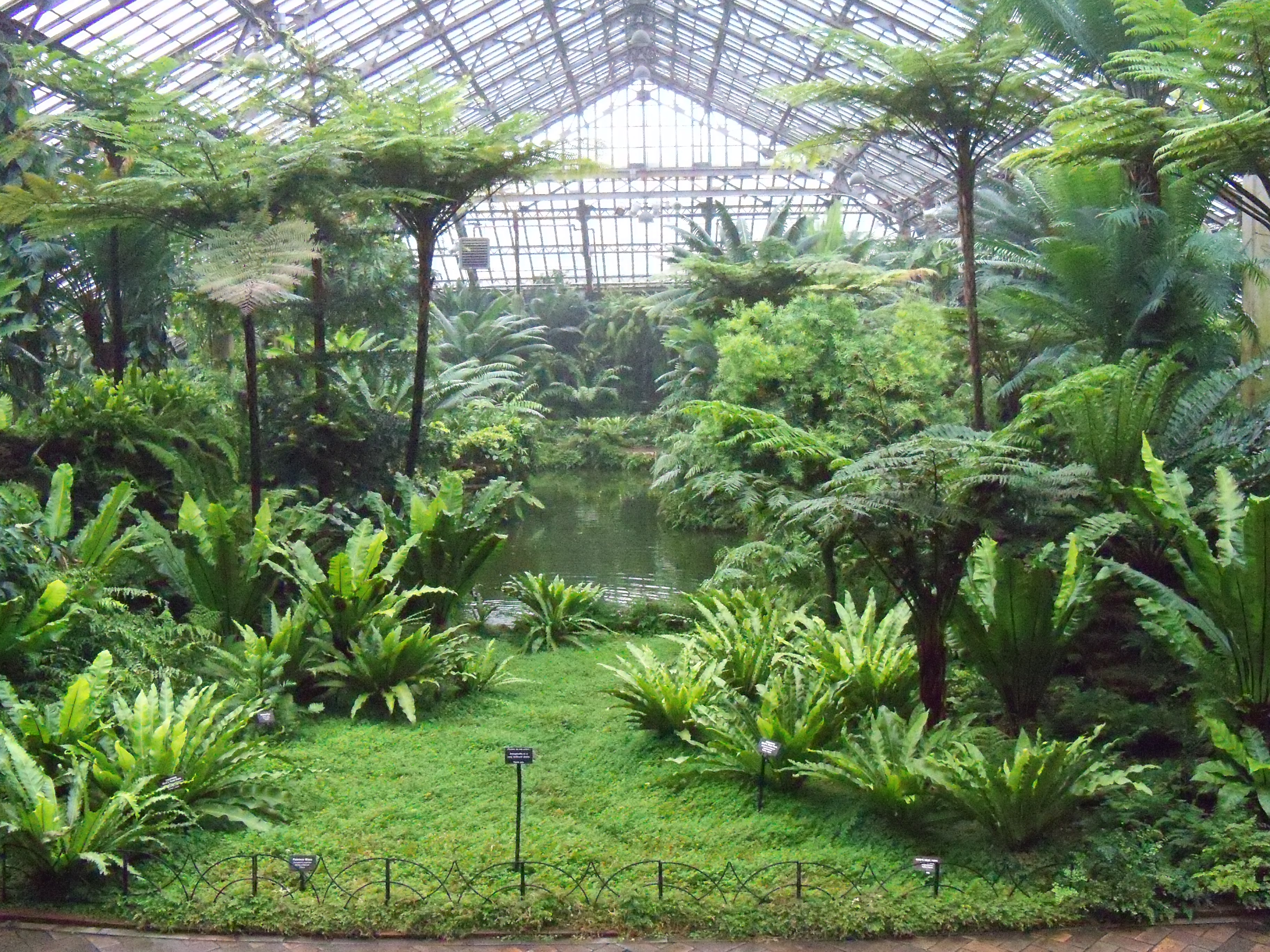 the real chicago u2013 garfield park conservatory enjoy a peaceful