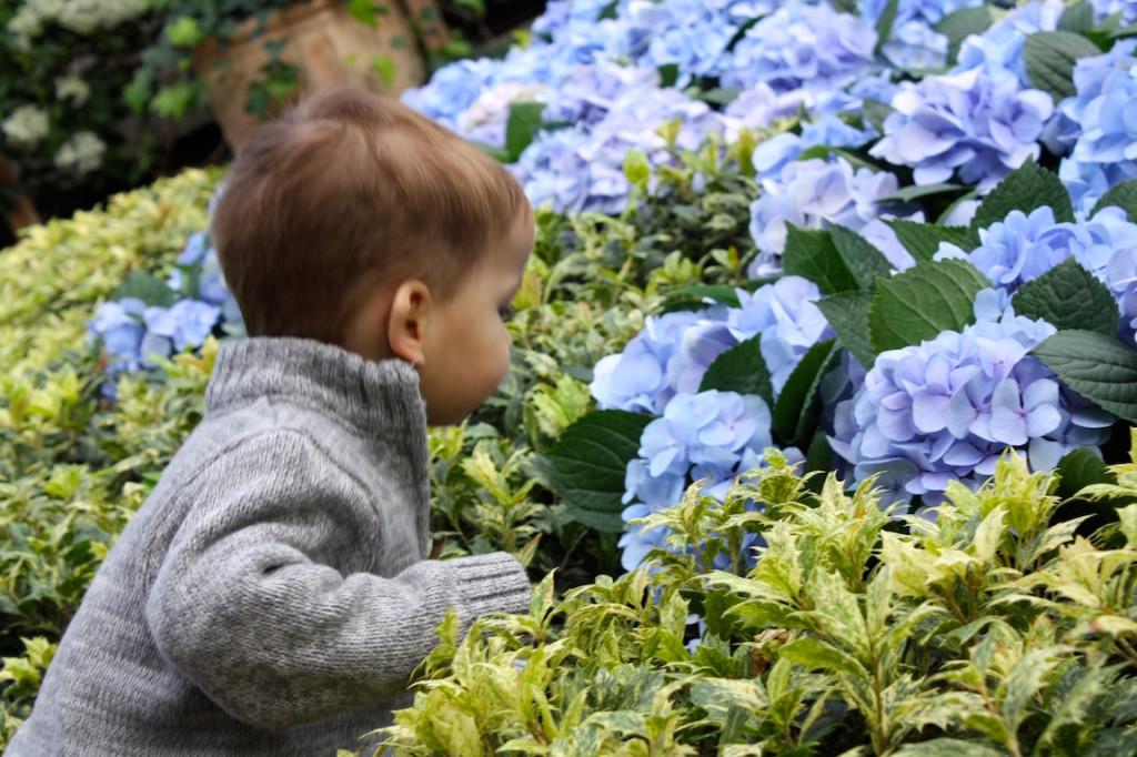Owen sniffing flowers at Botanic Garden (web) copy